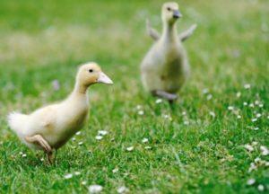 Image courtesy of Dan at FreeDigitalPhotos.net