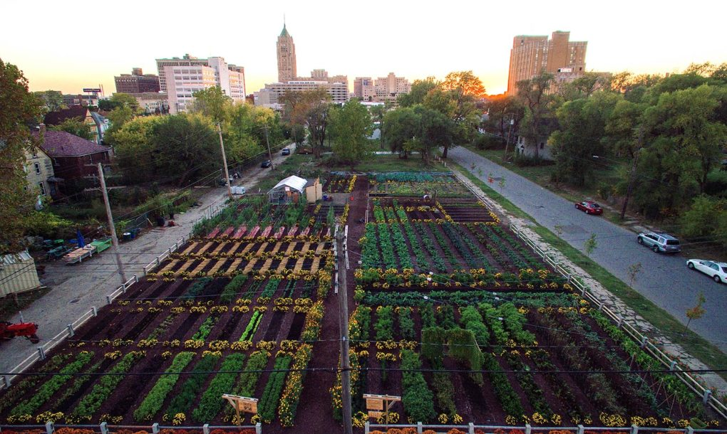 Michigan Urban Farming Initiative (MUFI) Garden